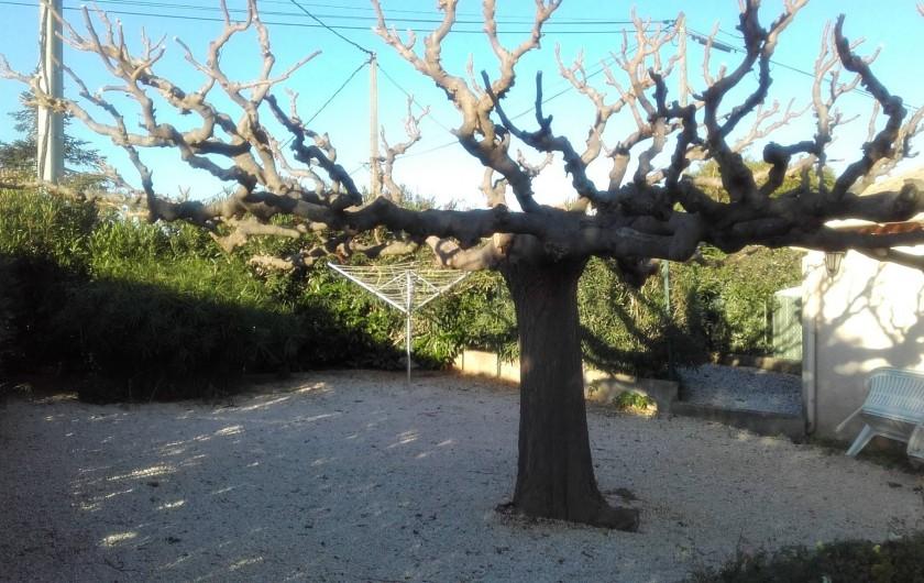 Location de vacances - Villa à Hyères - le jardin avec magnifique mûrier platane pour l'ombre
