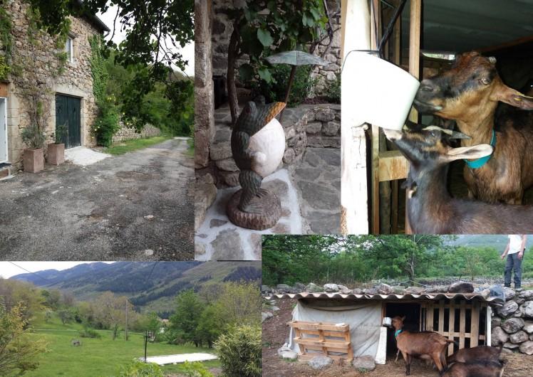 Location de vacances - Gîte à Valgorge - Nos 4 chèvres et notre mascotte, Zoé la grenouille!