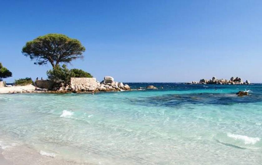 Location de vacances - Villa à Porto-Vecchio - Plage de Palombaggia