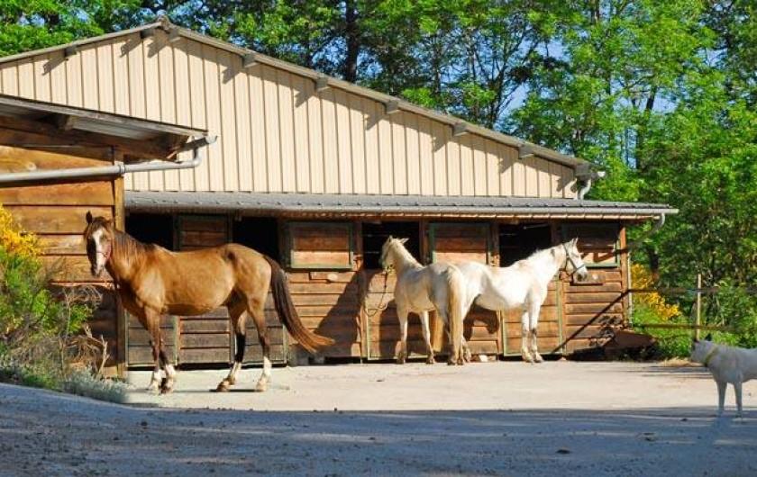 Location de vacances - Chambre d'hôtes à Saint-Laurent-de-Lévézou - Espace équestre chevaux de passage