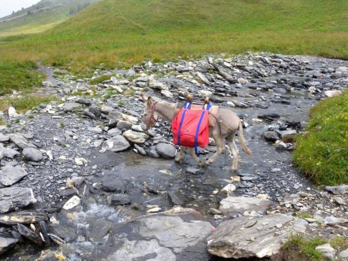 Location de vacances - Camping à Sorède - Randonnée avec un âne