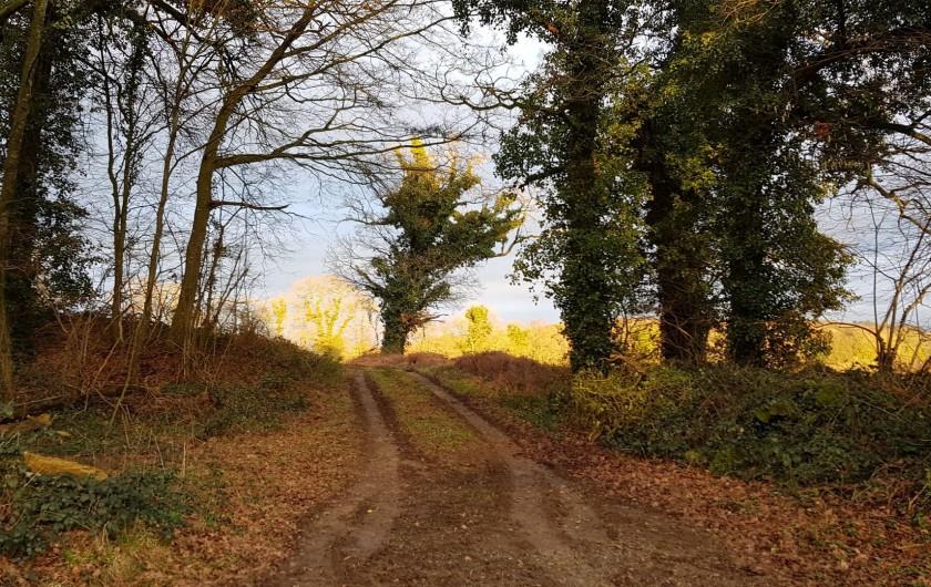 Location de vacances - Gîte à Bourguenolles - Nos forêts