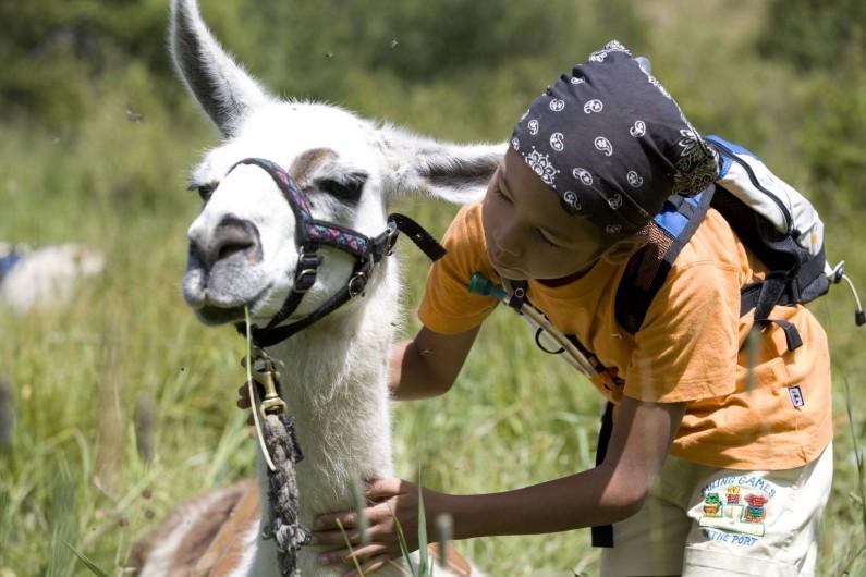 Location de vacances - Hôtel - Auberge à Névache - Les lamas de la Joie de Vivre: compagnons des petits et des grands ...
