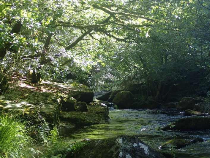 Location de vacances - Gîte à Saint-Hilaire-les-Courbes - La riviere.... La Vezere
