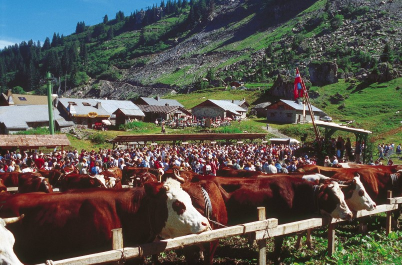 Location de vacances - Chalet à Châtel - ses belles montagnes et fetes d'Alpage