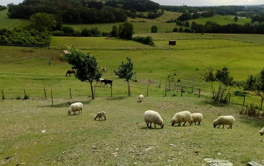 Location de vacances - Gîte à Brugnac - Mini ferme sur le domaine