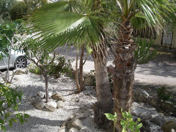 Location de vacances - Appartement à San Fulgencio - Jardin / parc derrière maison