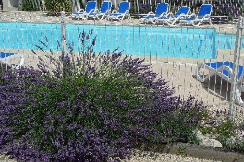 Location de vacances - Maison - Villa à Sainte-Marie-de-Ré - une partie de la piscine et les lavandes