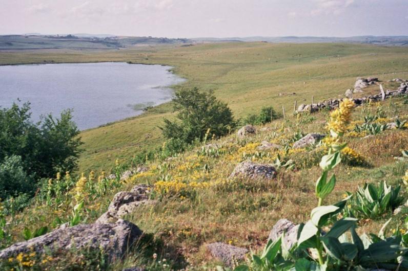 Location de vacances - Gîte à Saint-Pierre-de-Nogaret - Sur la Route des Lacs de l'Aubrac au printemps