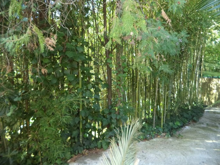 Location de vacances - Villa à Mandelieu-la-Napoule - uen partie du jardin : la bambouseraie