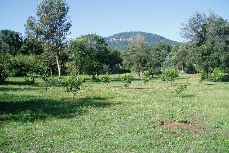 Location de vacances - Gîte à San-Giuliano