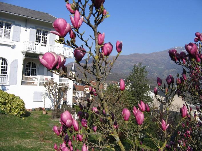 Location de vacances - Appartement à Argelès-Gazost - vue de la maison côté sud magnolia en fleur