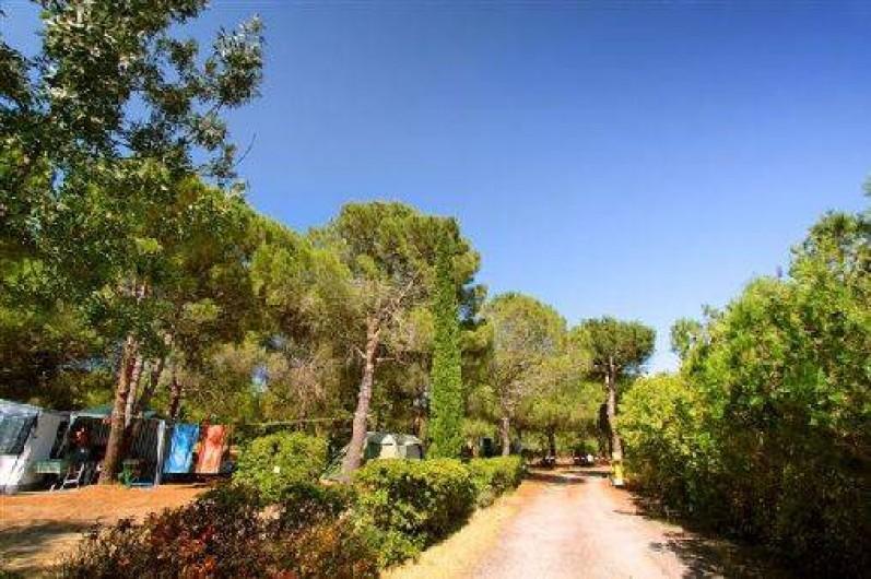 Location de vacances - Camping à Villemoustaussou - L'entrée du camping