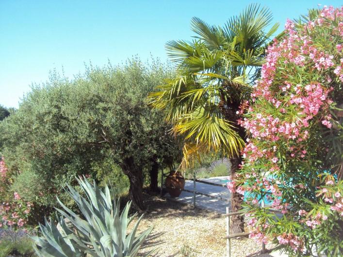 Location de vacances - Gîte à Chassiers - La  piscine et la végétation méditerranéenne