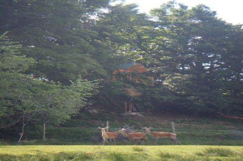 Location de vacances - Cabane dans les arbres à Paulhac-en-Margeride