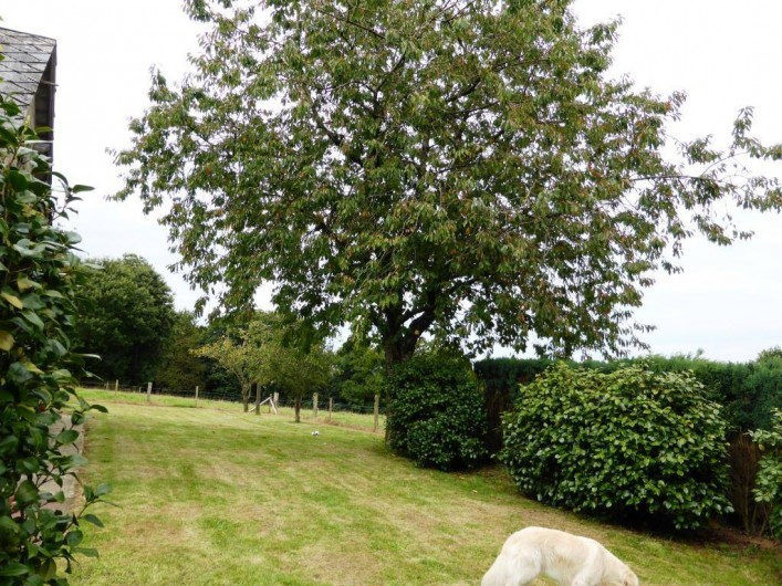 Location de vacances - Gîte à Louvigné-du-Désert - Jardin Arboré