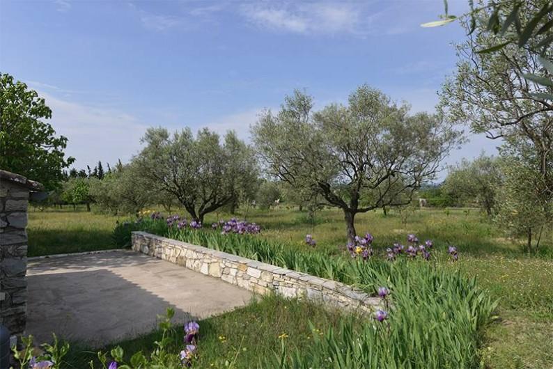 Location de vacances - Gîte à Saint-Jean-de-Serres - vue du terrain vers le Sud et le champ d'oliviers.