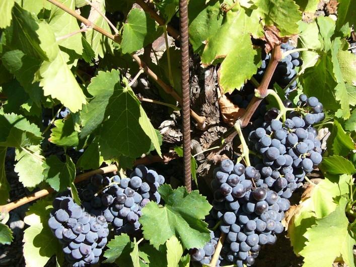 Location de vacances - Gîte à Cerbère - Plaisir des randonnées sentiers des vignes