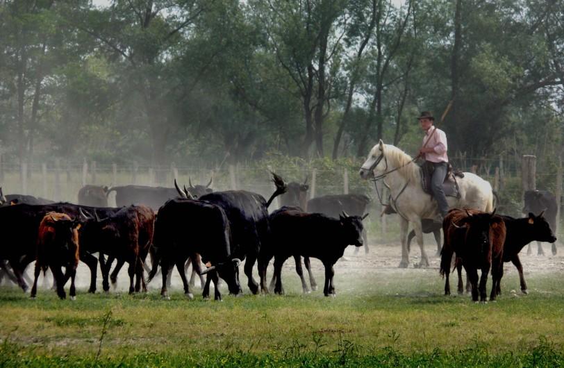 Location de vacances - Gîte à Arles - Gardian au milieu du troupeau