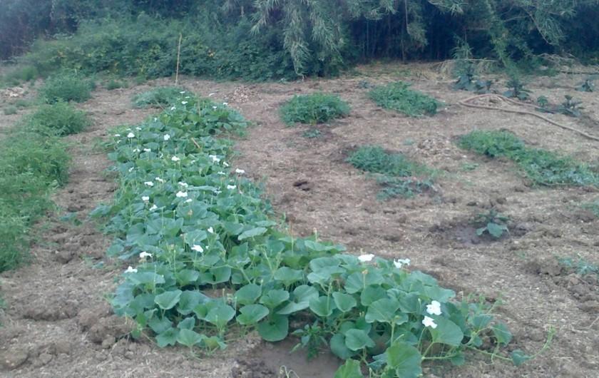 Location de vacances - Villa à Calatafimi - le jardin bio