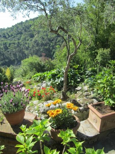 Location de vacances - Villa à La Spezia - Le jardin plein de fleurs