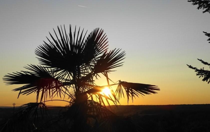 Location de vacances - Gîte à Saint-Péreuse - et oui c'est bien chez nous, notre palmier et son couche de soleil