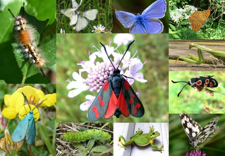 Location de vacances - Gîte à Lamaguère - une biodiversité galopante