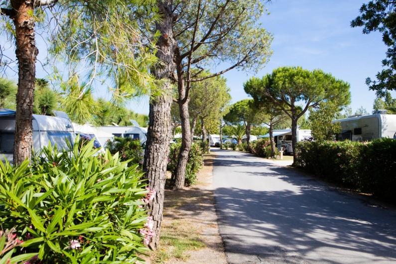 Location de vacances - Bungalow - Mobilhome à Agde - L'allée principale