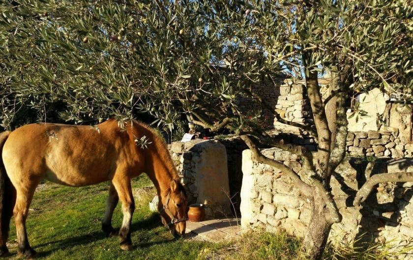Location de vacances - Gîte à Puyloubier - Notre jument Mele devant la terrasse de La CHAPELLE
